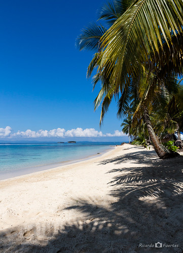 beach playa palmeras caribe