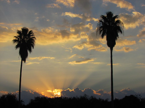 sunset sky sun clouds colorful cloudy bluesky palmtrees rays sunrays