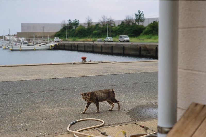 kakarashima cats