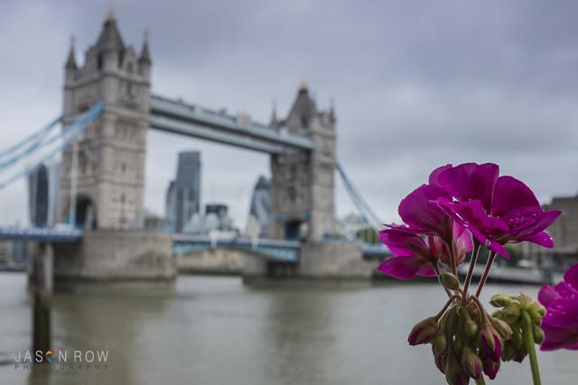 Defocused view of Tower Bridge