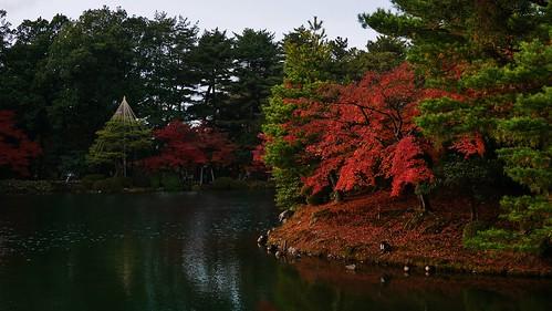 autumn water japanesegarden ana pond zen 日本 紅葉 albero baum giappone giapponese kenrokuen ishikawa 兼六園 金沢 石川 全日空 albol zangarden