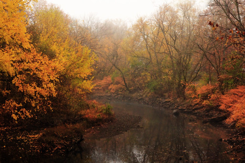 park autumn mist tree fall fog river newjersey foliage rahway rahwayriverpark rahwayriver