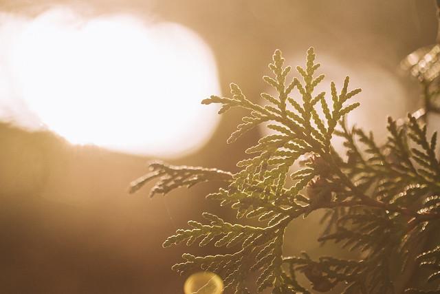 [293] In the Sunlight