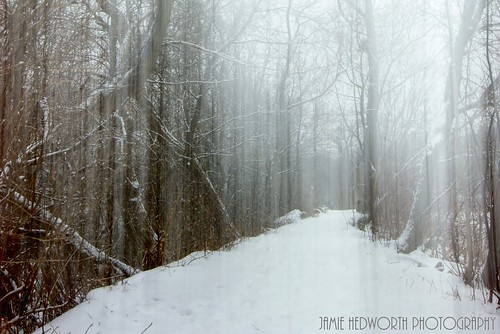 trees snow ontario canada nature woods milton hdr miltonon hdrphotography longexposurephotography jamiehedworthphotography