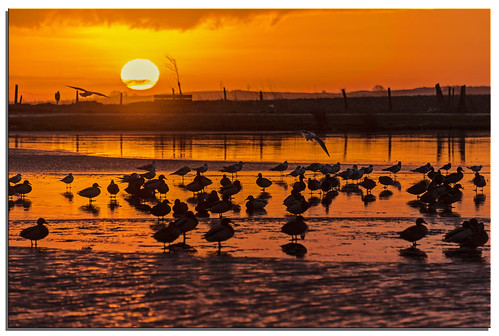 water sunrise ngc ducks 2014 keighley d600 redcartarn nikonfxshowcase