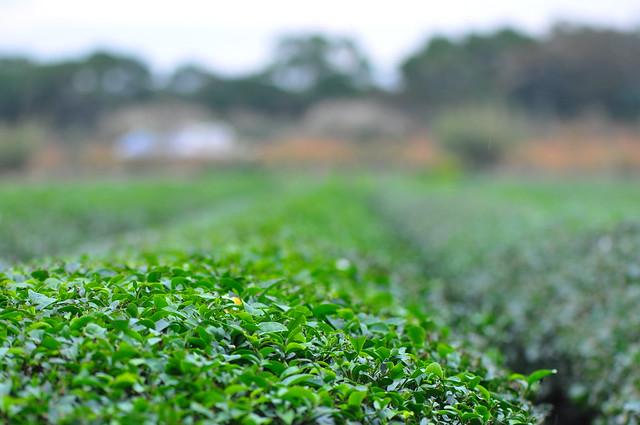 茶&花 (6)