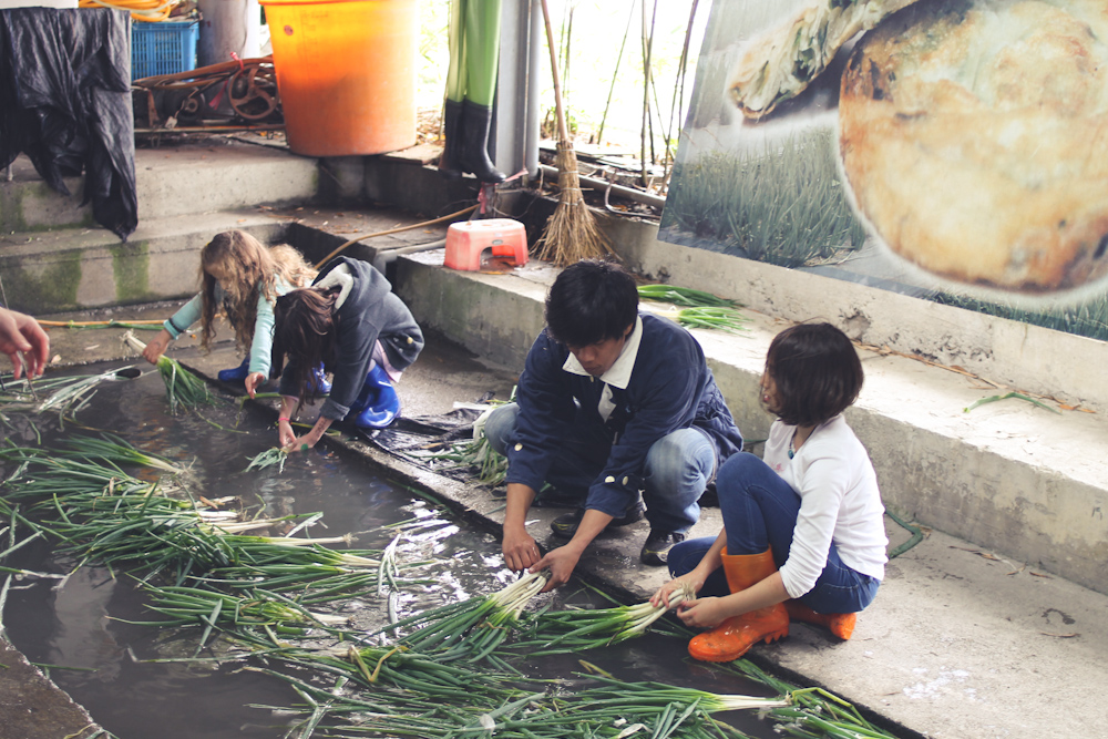 Yilan Spring Onion Country-7