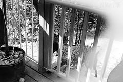 Sunglass Polarizer