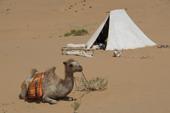 Kameltrekking in der Wüste Gobi. Unverzichtbare Begleiter in der Wüste. Foto: Günther Härter.