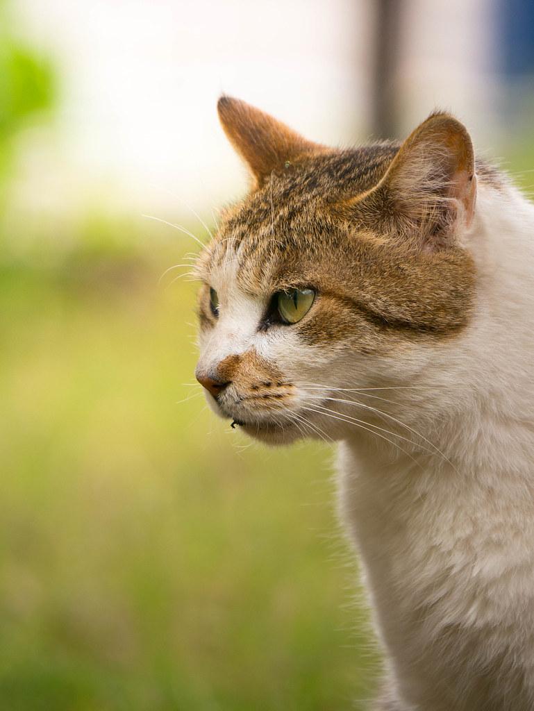 猫の超望遠写真