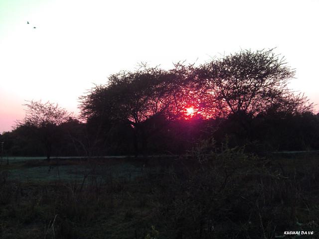 सूर्यास्त (sunset), Sony DSC-S950