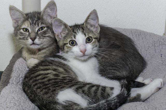 PAWS kittys