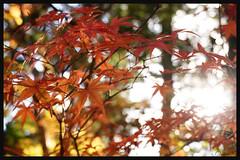 日本京都[高雄]-神護寺.64