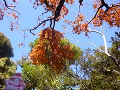 Slurpuff in Oshiage, Tokyo 65 (Sumida park)