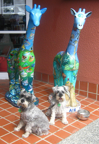 Christchurch Stands Tall giraffes and dogs