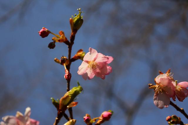 2014-03-16_00069_高松山