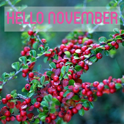 hello_november2014