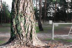 Tree Trunk / Baumstamm