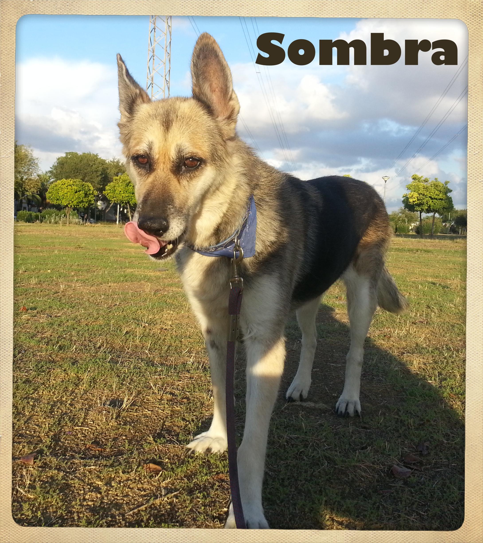 Sombra 5