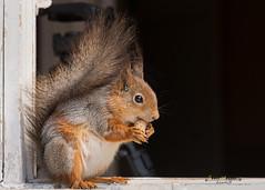 squirrels food