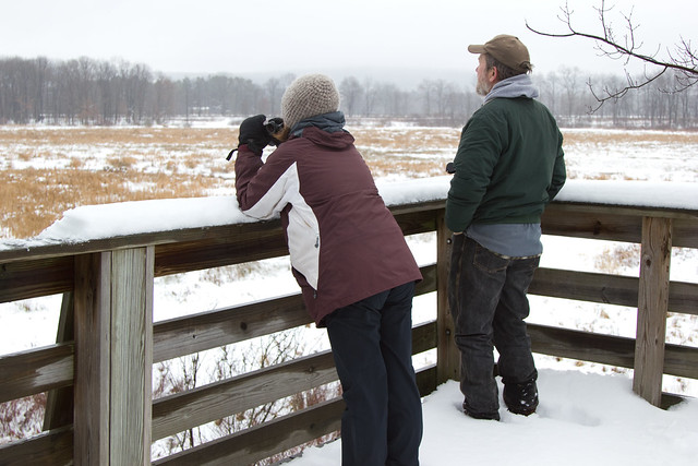 Christmas Bird Count - Hugh Wood Tower
