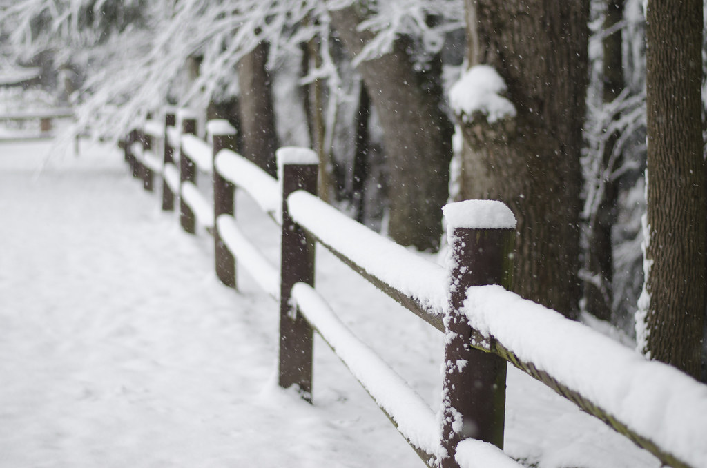 the first snow 7
