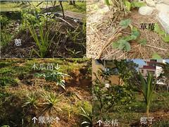 校內栽種植物