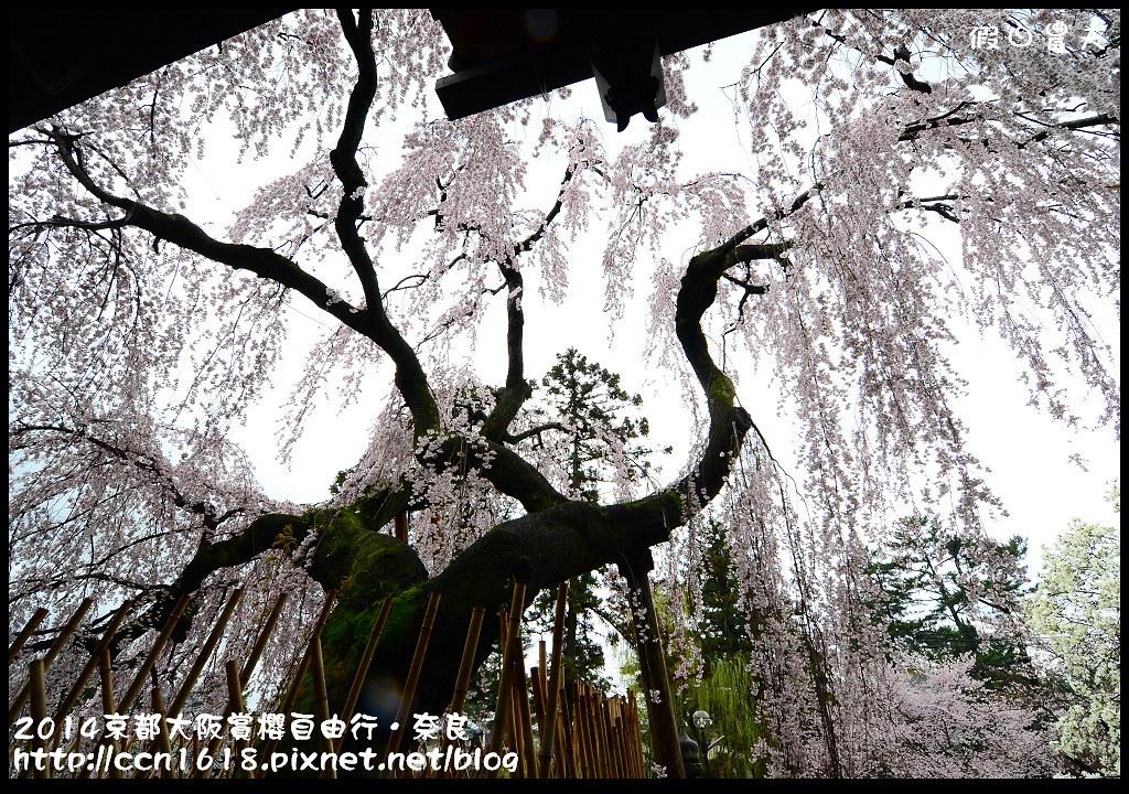 2014京都大阪賞櫻自由行.奈良DSC_0898