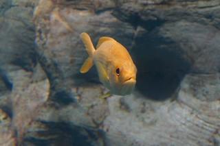 100 Osaka aquarium