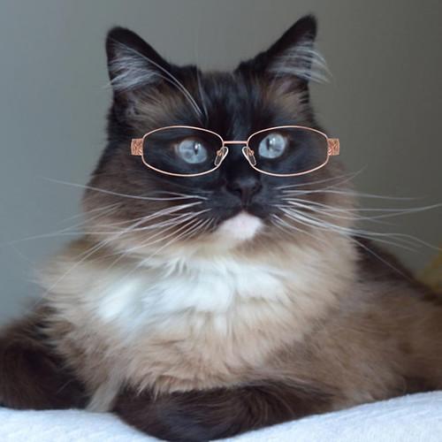 Bean_Glasses_8