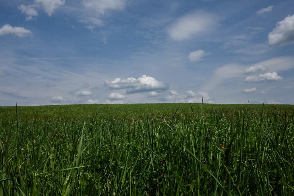Macricostas hay field