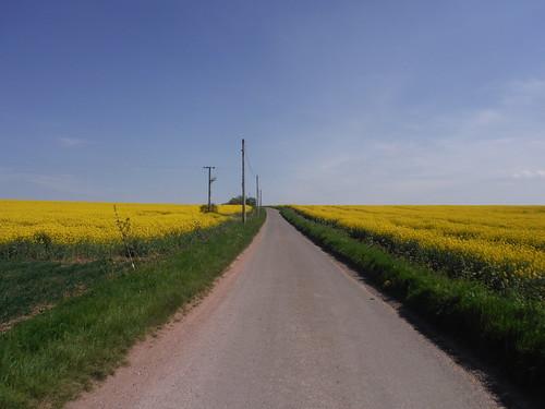 Towards Newnham