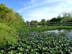 Lofts Pond - May 11 2016 (24)