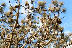 Top of Torrey Pines