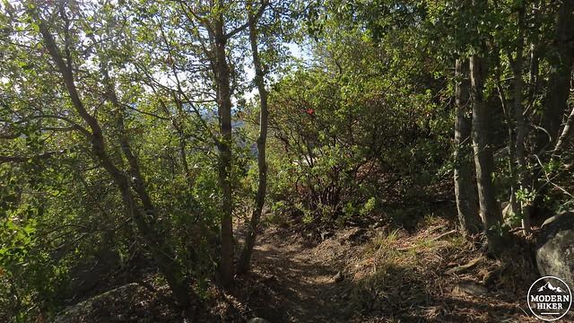 Corte Madera Mountain 14