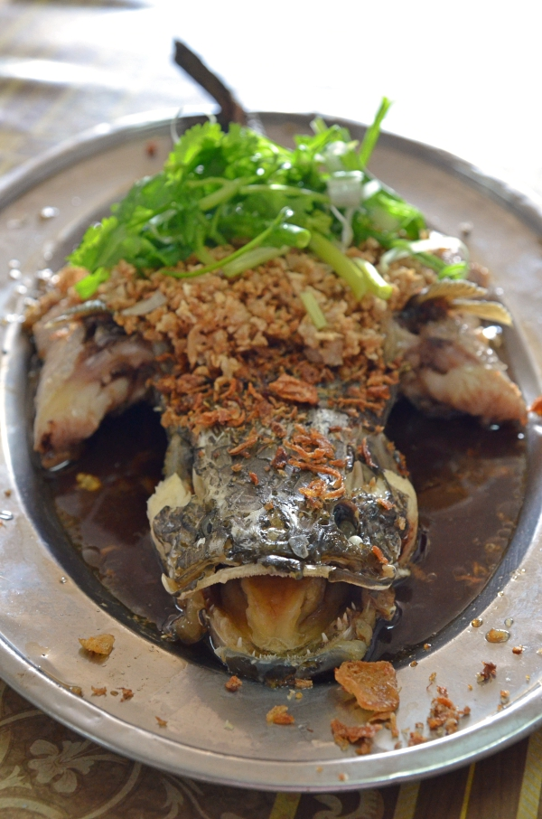 Steamed Sang Yue with Choy Pou
