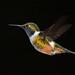 Bird by justinclayton99
