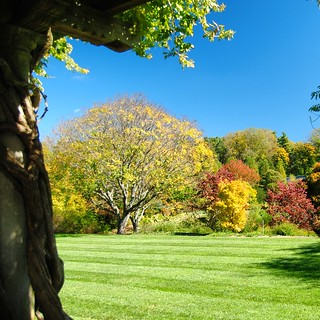 Biltmore Estate Autumn Trees