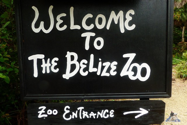 Belize Zoo 19.11.2014 12