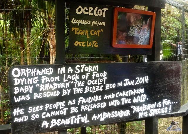 Belize Zoo 19.11.2014 68