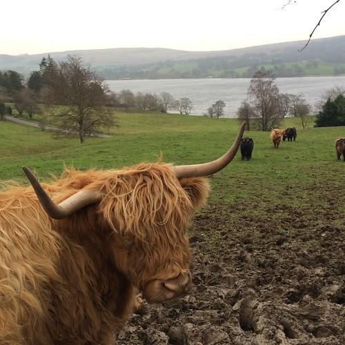 scotland066
