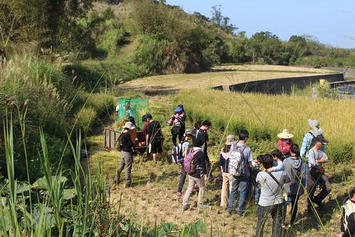 石虎田體驗營吸引民眾親近石虎棲地。