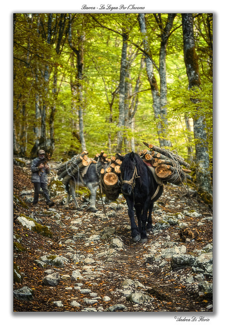 Barrea - La Legna Per l'Inverno
