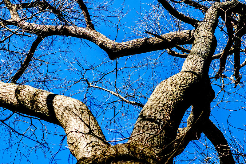 Kramer Original Woods Nature Preserve - January 5, 2015