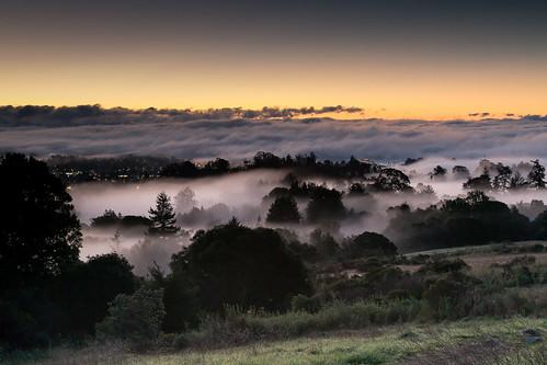 california santacruz mist fog sunrise foggy mistic