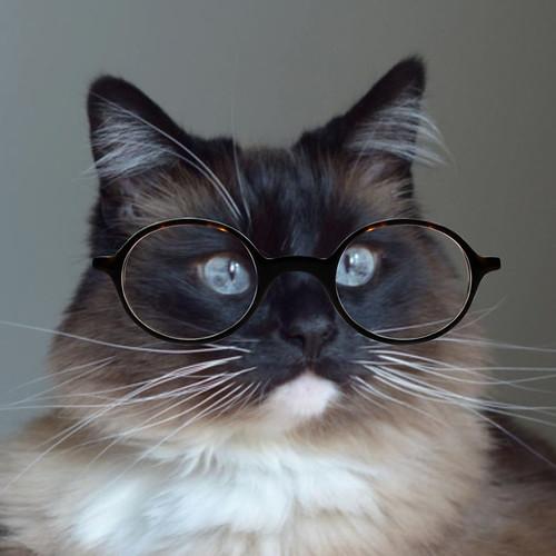 Bean_Glasses_3
