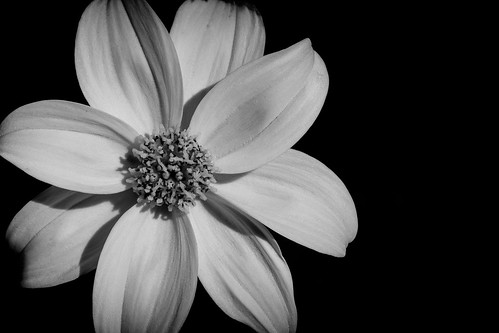 Flower In The Dark.jpg