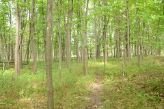 Forest Habitat at Spring Garden