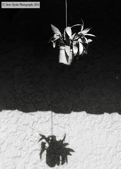 Steve Taylor (Photography) - Hanged at Noon