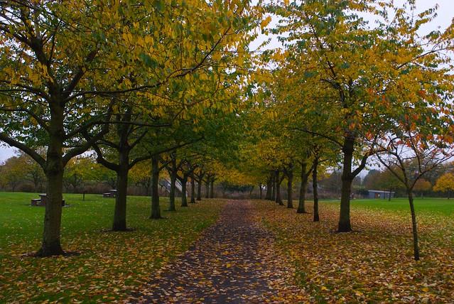 tree path track leaves - photo #49